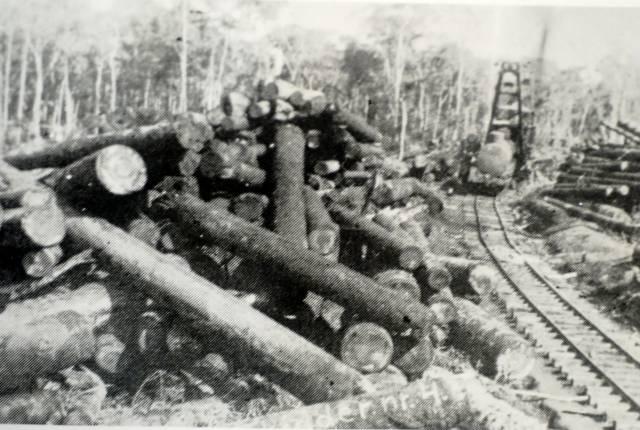 lumber e contestado